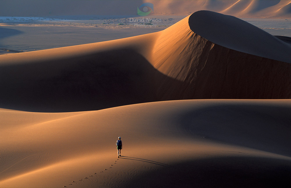 Tread Boldly on Sand Dunes, Namib Desert, Namibia, Africa © David Noton