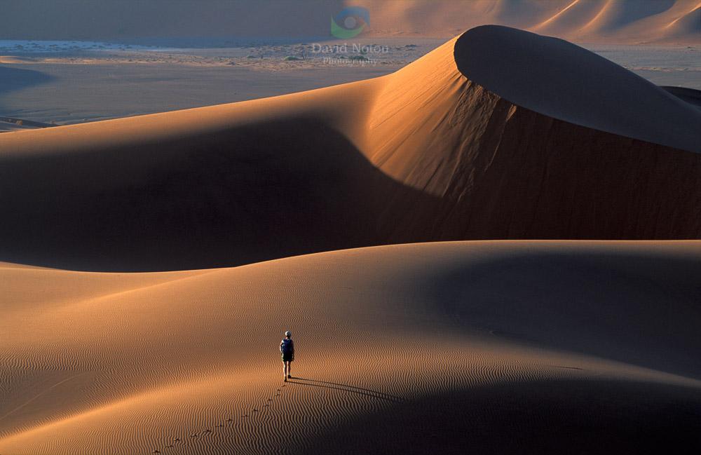 Tread Boldly on Sand Dunes, Namib Desert, Namibia, Africa © David Noton