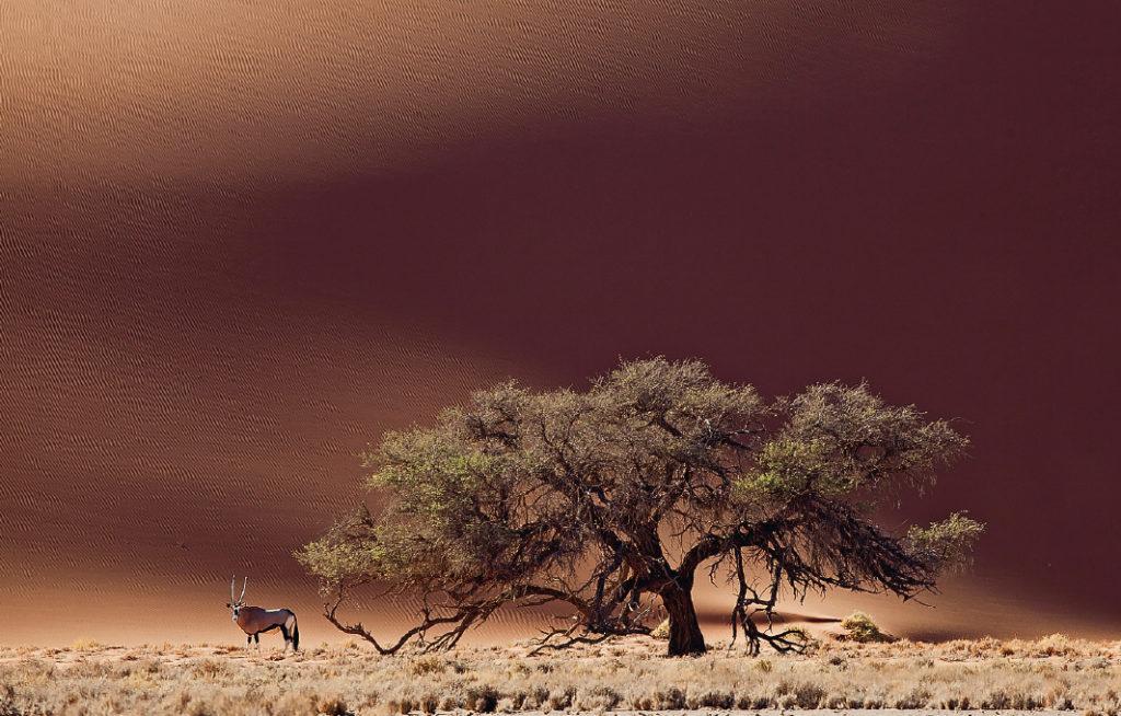TerradAfrica_pag48-49
