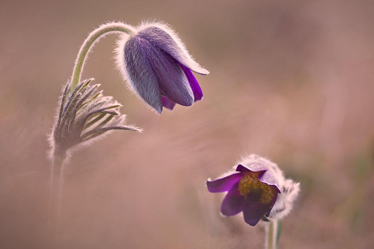 MACRO - Immagine di Gigi Gallone