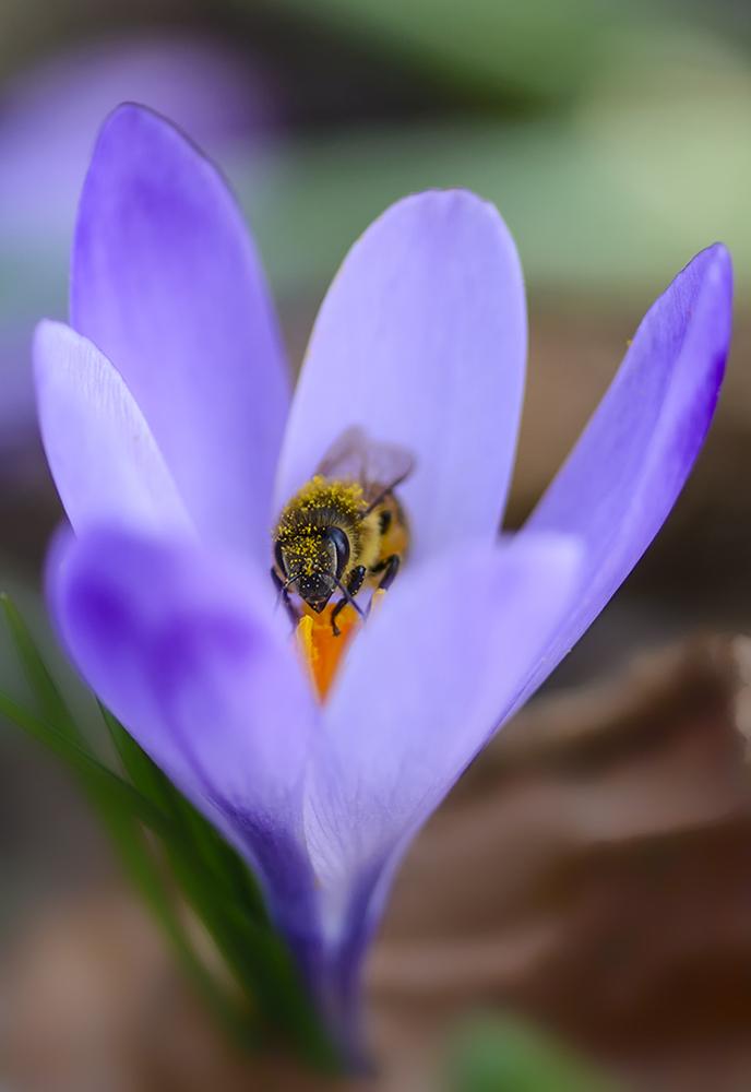 Amiche Operaie: le nostre amiche api attraverso l'obiettivo del fotografo. Di Alberto Fornasin, Marco Gon e Gigi Gallone