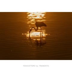 Fenicottero al tramonto