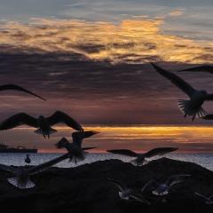ali al tramonto