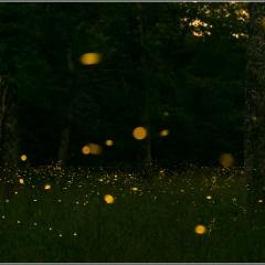 Rincorrendo le lucciole