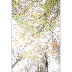Trame d'autunno