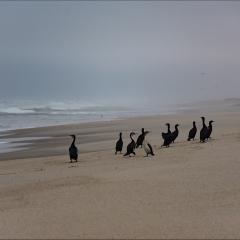 Skeleton coast - Namibia